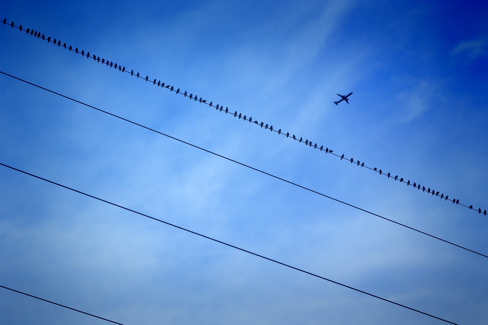 Are warnings on high bird activity meaningless without standards?